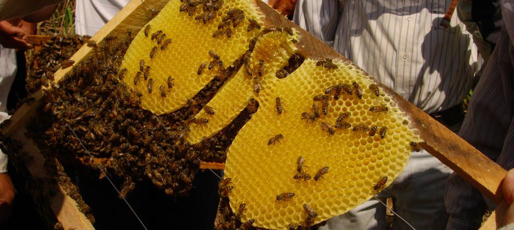 portada-panel-miel